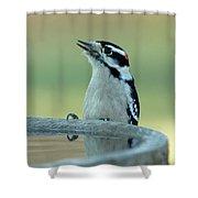 Birdbath Shower Curtain
