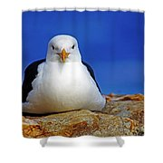 Birds 10 Shower Curtain