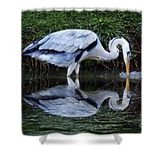 Birds 20 Shower Curtain