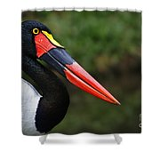 Birds 4 Shower Curtain