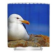 Birds 9 Shower Curtain