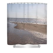 Birds At The Beach At Low Tide Shower Curtain