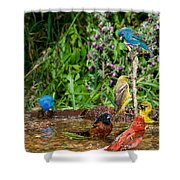 Birds Bathing Shower Curtain