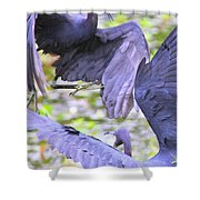 Birds - Fighting - Herons Shower Curtain