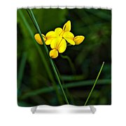 Bird's-foot Trefoil Shower Curtain