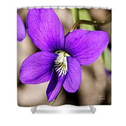 Birds Foot Violet Shower Curtain