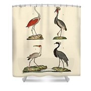 Birds From Hot Countries Shower Curtain