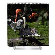 Birds Gather Shower Curtain
