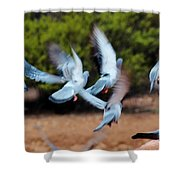 Birds In Flight 030515aa Shower Curtain