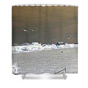 Birds In Flight Over Lafitte Bay Shower Curtain