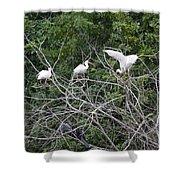 Birds In The Brush Shower Curtain
