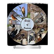 Birds Of Ontario Shower Curtain