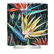Birds Of Paradise  2   Sold Shower Curtain