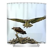 Birds Of Prey Shower Curtain