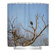 Birds Of Prey II Shower Curtain