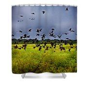 Birds Of The Wetlands V11 Shower Curtain