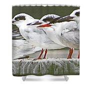 Birds On A Ledge Shower Curtain