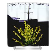 Birds On A Wire In Cooper Young Shower Curtain