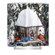Birds On Bird Feeder In Winter Shower Curtain