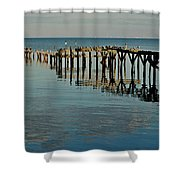 Birds On Old Dock On The Bay Shower Curtain