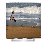 Birds On The Beach Shower Curtain