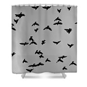 Birds That Knew Shower Curtain