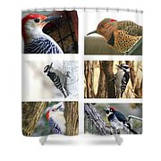 Birds - Woodpeckers - Boxed Cards Shower Curtain