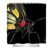 Birdwing Butterfly Shower Curtain