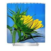 Birth Of A Sunflower By Kaye Menner Shower Curtain