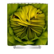 Birth Of A Sunflower Shower Curtain