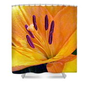 Birthday Lily. Shower Curtain