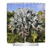 Bismarck Palm  Bismarckia Nobilis Shower Curtain