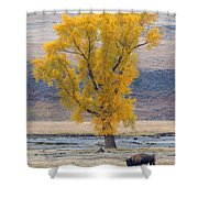 Bison And Cottonwood Shower Curtain