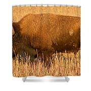Bison At The Elk Ranch In Grand Teton National Park Shower Curtain
