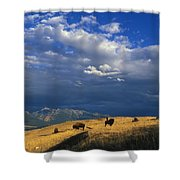 Bison Back From The Brink Shower Curtain