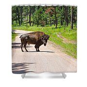 Bison Blocking The Road Shower Curtain