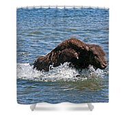 Bison Calf Running After Mama In Yellowstone National Park Shower Curtain