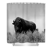 Bison Cow On An Overlook In Yellowstone National Park Black And White Shower Curtain