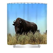 Bison Cow On An Overlook In Yellowstone National Park Shower Curtain
