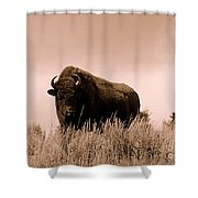 Bison Cow On An Overlook In Yellowstone National Park Sepia Shower Curtain