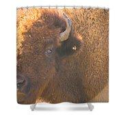 Bison Evening Shower Curtain