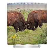 Bison Fight In Grand Teton National Park Shower Curtain