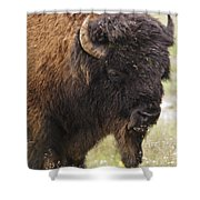 Bison From Yellowstone Shower Curtain