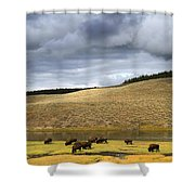 Bison Grazing Along The Yellowstone River In Hayden Valley Shower Curtain