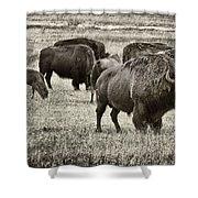 Bison Herd Bw Shower Curtain