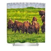 Bison Herd Grazing In Lamar Valley Shower Curtain