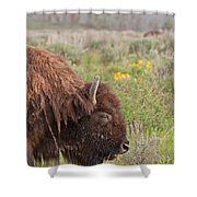 Bison In The Flowers Ingrand Teton National Park Shower Curtain