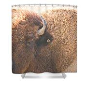 Bison Lick Shower Curtain