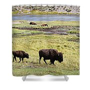 Bison Mother And Calf In Yellowstone National Park Shower Curtain
