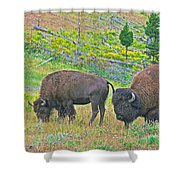 Bison Pair In Hayden Valley In Yellowstone National Park-wyoming  Shower Curtain